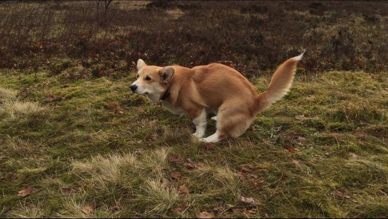 Hondenpoep In Tuin : Omroep flevoland nieuws irritatie over hondenpoep leidt tot